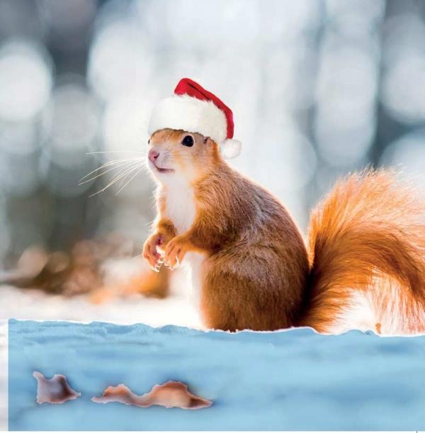 Santa Squirrel Christmas Cards